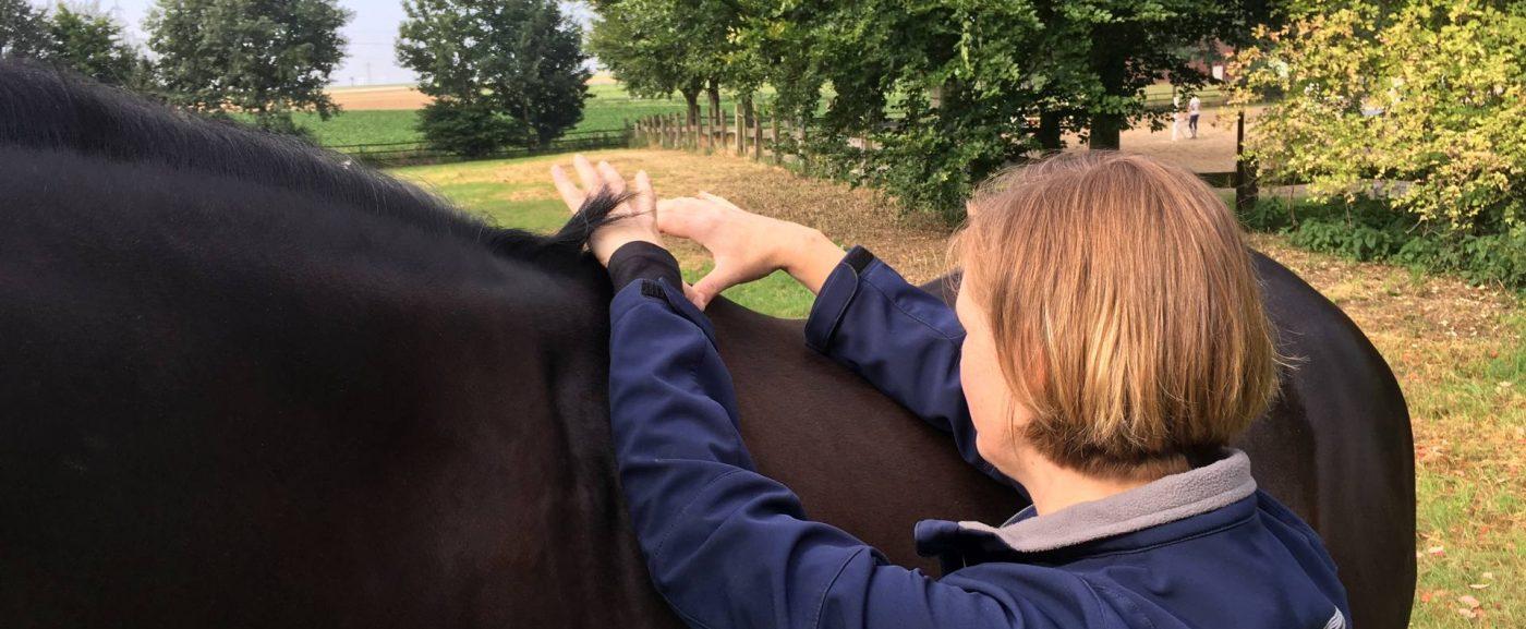 Willkommen bei Pferdeosteopathie Pauling